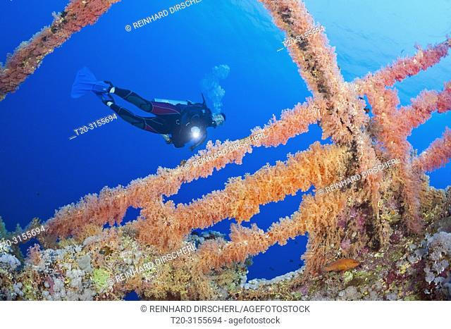 Scuba Diver at Numidia Wreck, Brother Islands, Red Sea, Egypt