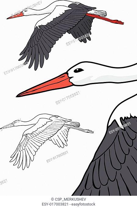 Flying stork, vector illustration