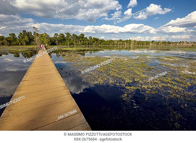 Footbridge on the swamp to Neak Pean temple, Angkor, Siem Reap, Cambodia