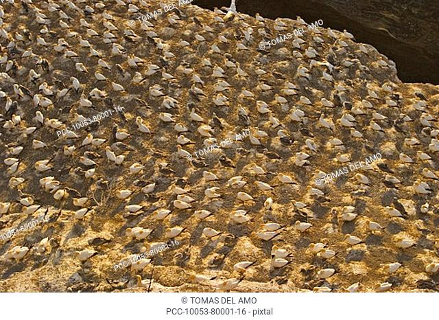 View from above of a rock covered with white birds