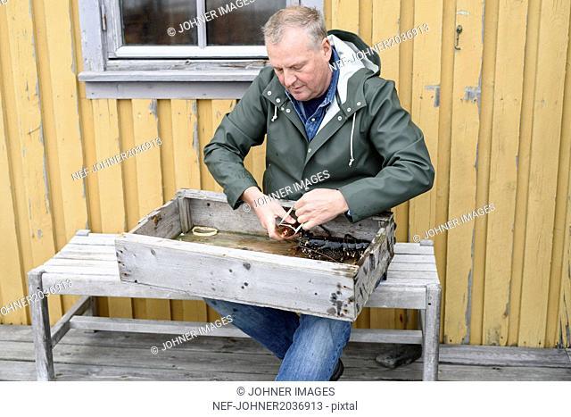 Man preparing lobster