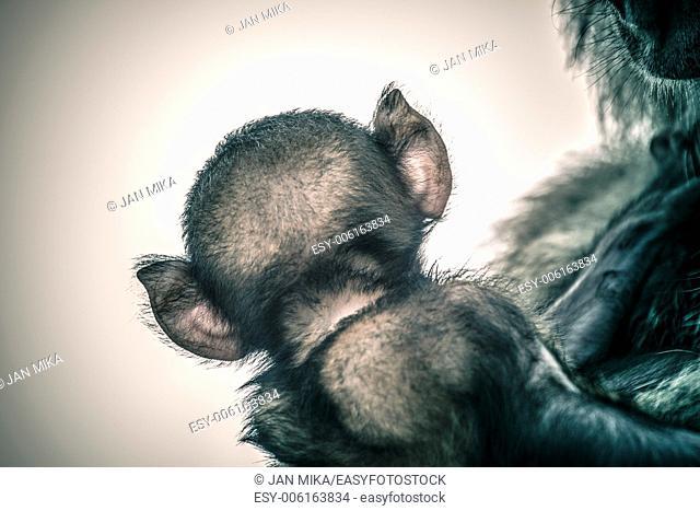 Creative portrait of rear view of monkey like mythological creature imp or demon