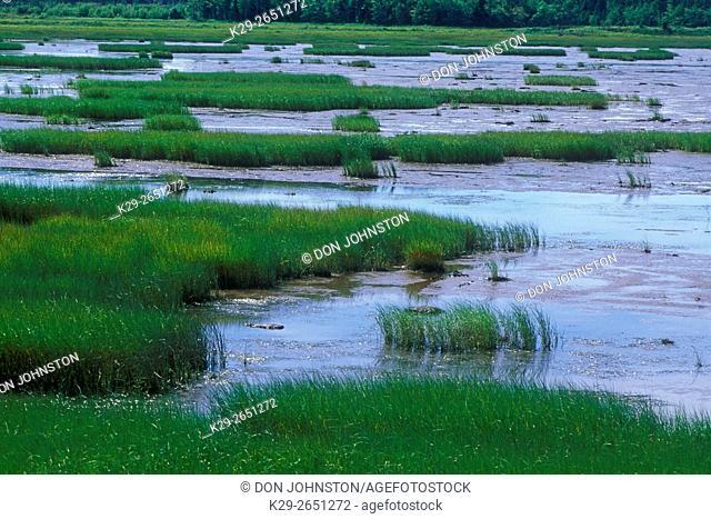 Marsh grasses and salt estuary on a summer afternoon, Shippagan, NB, Canada