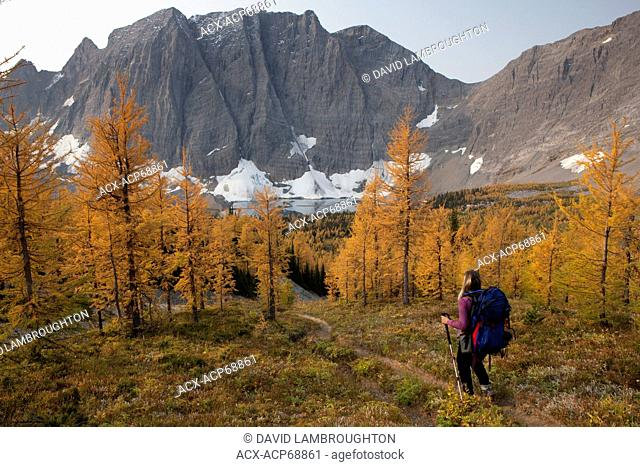 Backpacker descending through larch forest to Floe Lake, Kootenay National Park, British Columbia, Canada