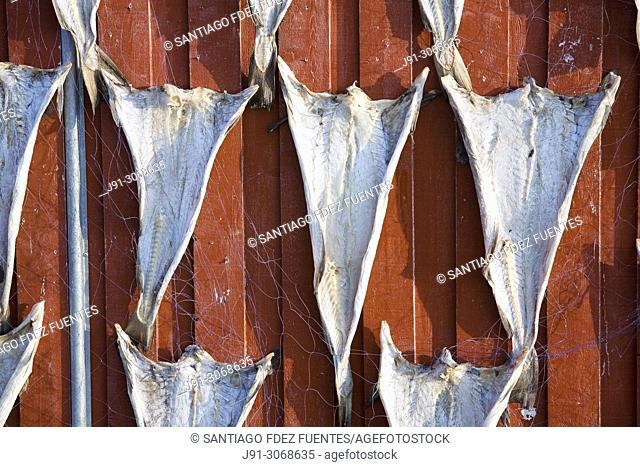 Drying cod. Norland. Vegaøyan (Vega Islands). UNESCO World Heritage. Norway