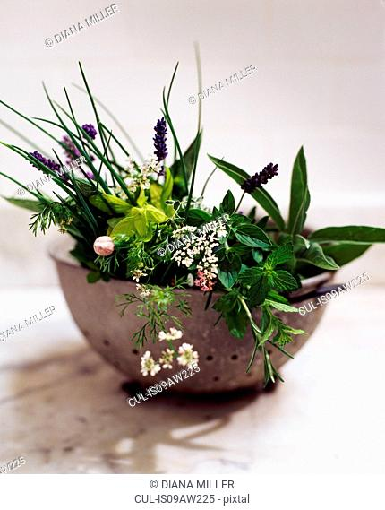 Vintage strainer full of herbs and herb flowers