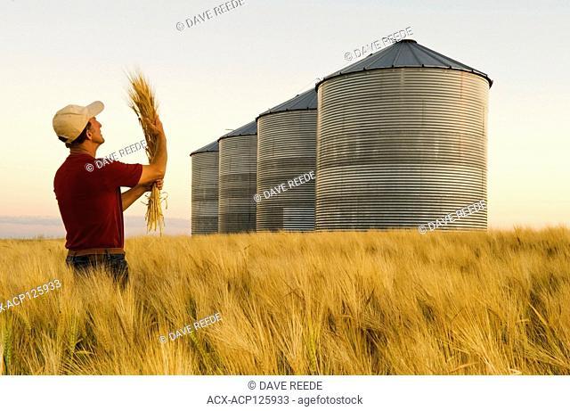 a man in a maturing barley field with grain storage bins/silos in the background, near Carey, Manitoba, Canada
