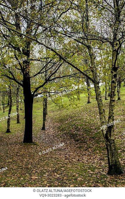Beautiful autumn forest in a rainy day at Zamudio, Bizkaia, Basque Country, Spain, Europe
