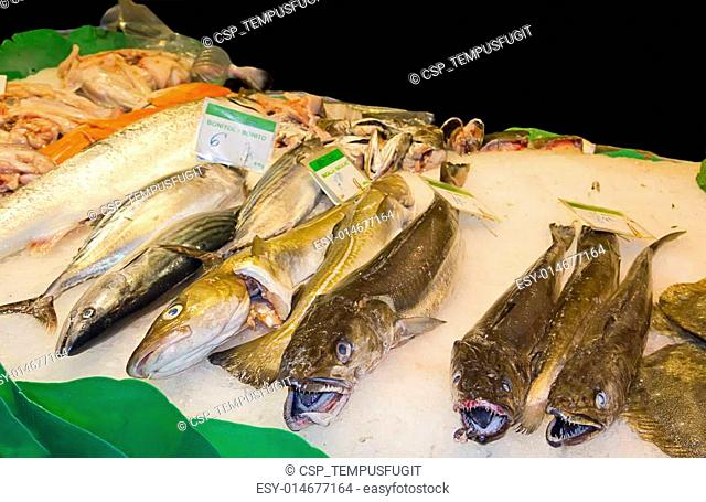 Variety of fresh fish in the market