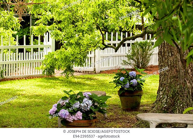 A white picket fence and arbor gate with a path, hydrangeas and a large pecan tree.Georgia USA
