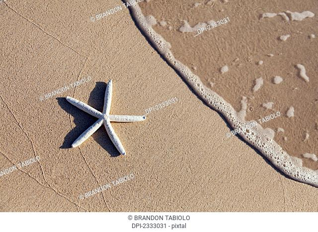 Starfish on the beach with wave washing ashore;Honolulu oahu hawaii united states of america