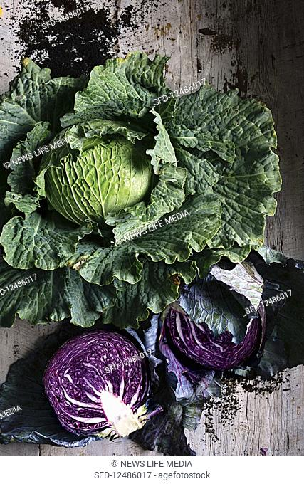 Savoy cabbage and a halved red cabbage