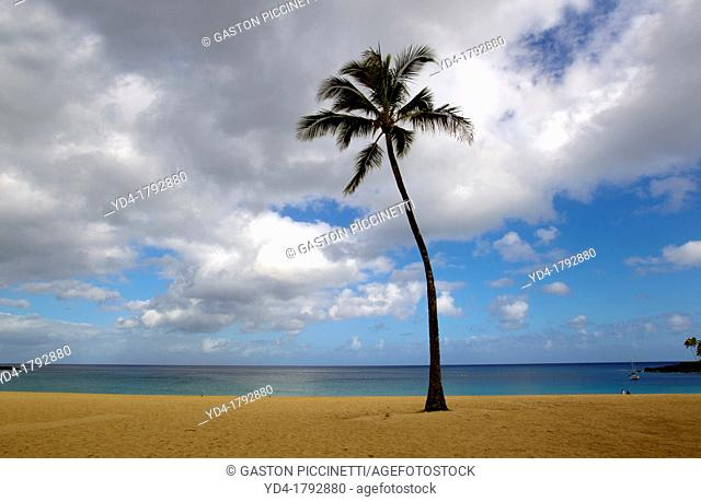 Palm in the beach, Waimea Bay Beach, North Shore, O`ahu, Hawaii, USA