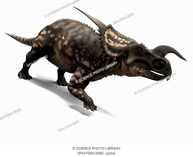 Einiosaurus dinosaur, computer artwork. This dinosaur lived 65 to 100 million years ago during the Late Cretaceous period