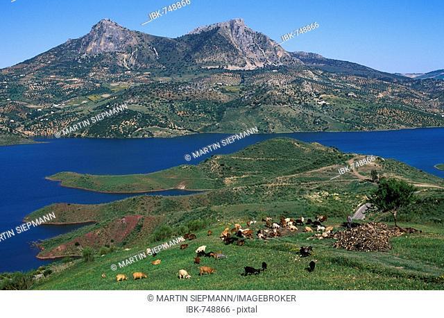 Embalse de Zahara, reservoir in the Sierra de Grazalema, Cádiz Province, Andalusia, Spain