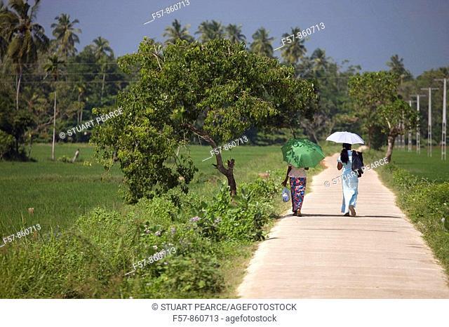 Women walking through the Rice fields, Sri Lanka