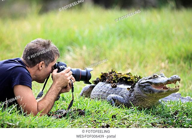 South America, Brasilia, Mato Grosso do Sul, Pantanal, Photographer and a Yacare caiman, Caiman yacare