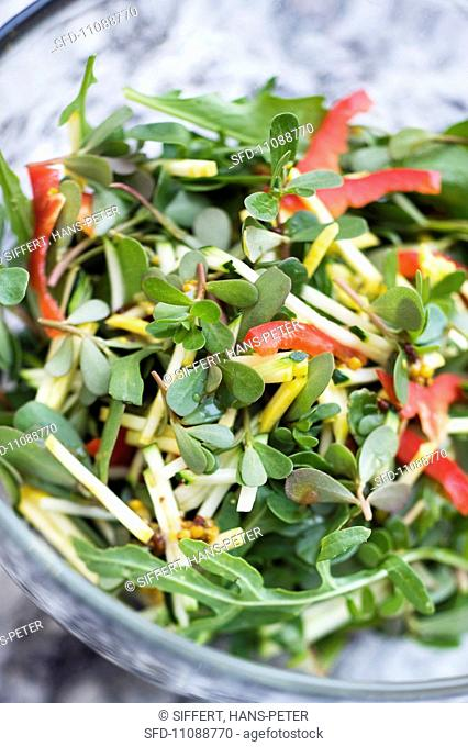 Summer salad with purslane and vegetables