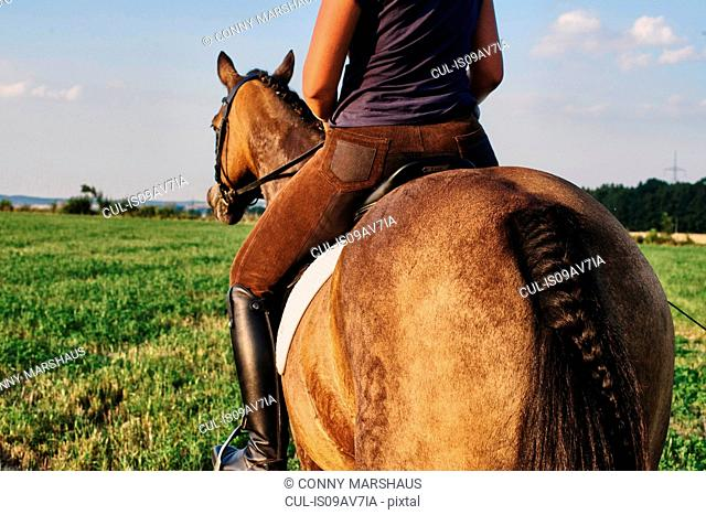 Rear view of woman riding bay horse in field
