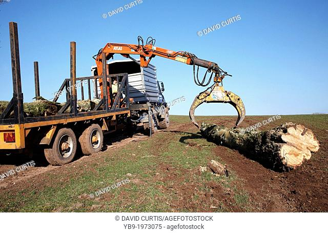 Farmer in South Wales UK, loading up a flatbed with trees that were toppled in a storm using a mechanical grabber