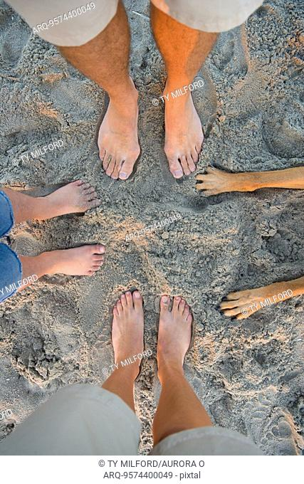 Group of feet and dog paws on sand