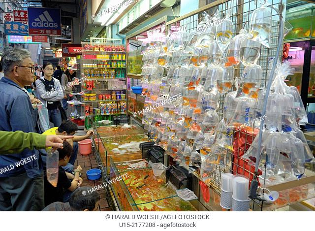 Hong Kong, China, Asia. Hong Kong Kowloon. Gold Fish Market on Tung Choi Street. Typical toy fish display in plastic bags