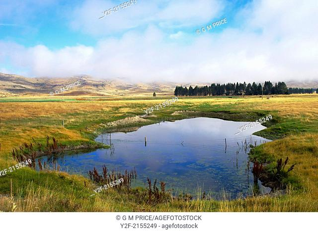pond in grazing land near Lake Tekapo, New Zealand