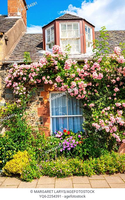 Beautiful old cottage with climbing roses in Scotland