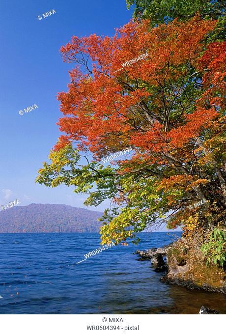 Lake Towada and Autumn Leaves, Towada, Aomori, Japan