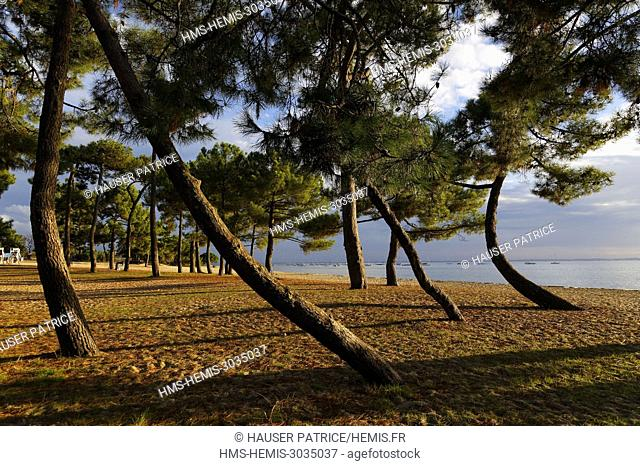 France, Gironde, Bassin d'Arcachon, Cap Ferret, Andernos les Bains, Betey beach