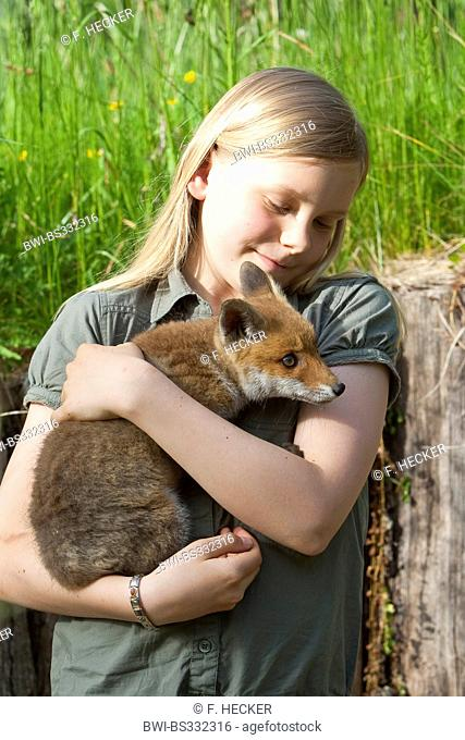red fox (Vulpes vulpes), girl with an orphaned juvenile on the arm being upbrought by hand, Germany