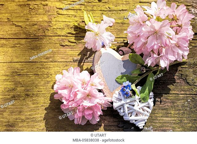 Photography on an old wood bank. Pink cherry flowers, to white hearts and forget-me-not arranges to still life
