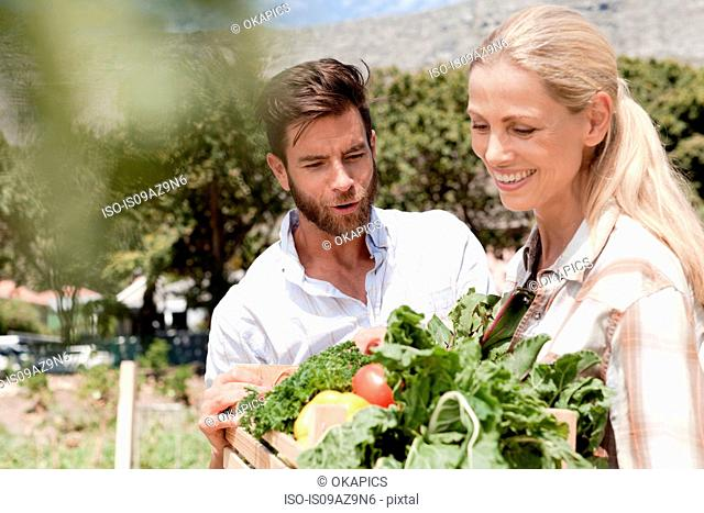 Mature couple holding crate of fresh vegetables in garden