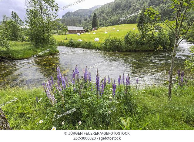 Norwegian farm near Voss, at the Norway, near Granvin