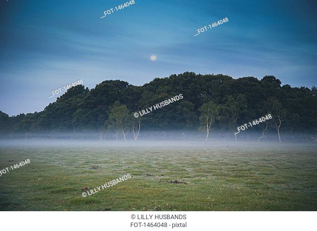 Trees on field in foggy weather at dusk