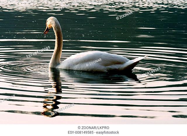 italy green side swan