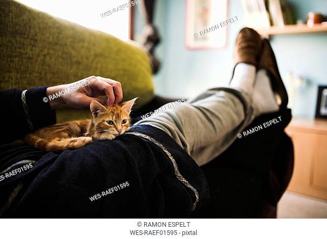 Tabby kitten relaxing on the lap of owner