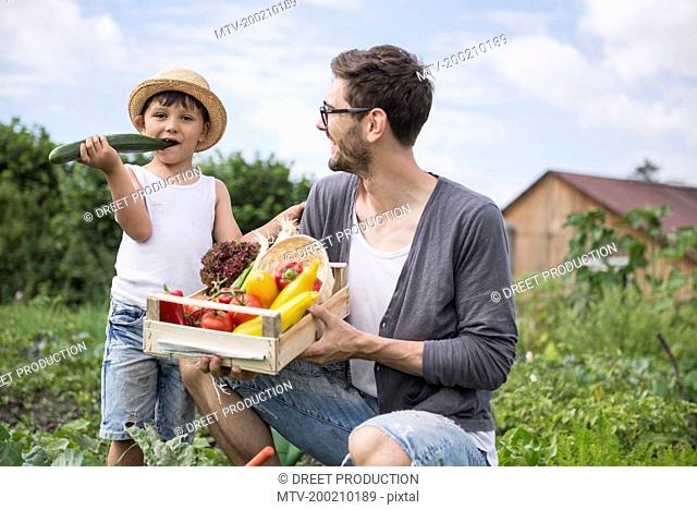 Mid adult man with his son harvesting vegetables in community garden, Bavaria, Germany