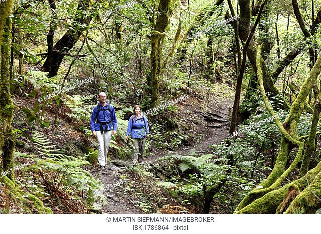 Man and woman hiking on a forest trail, laurel forest, Garajonay National Park, La Gomera, Canary Islands, Spain, Europe