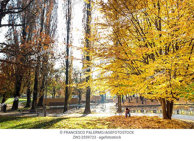 The change of leafs on trees in autumn time. Vigevano, Lombardy. Italy