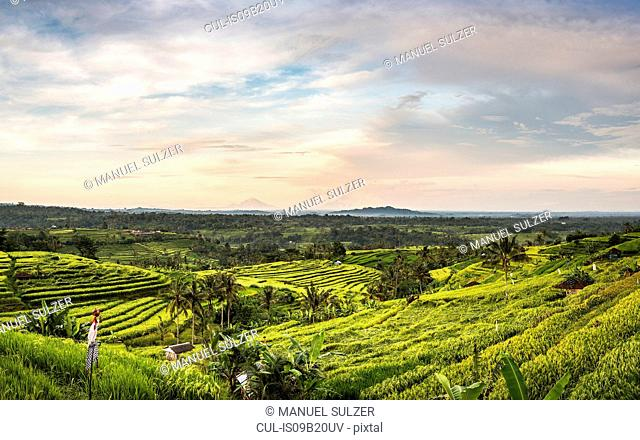 Elevated view of Jatiluwih rice terraces, Bali, Indonesia