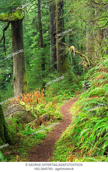 Harts Cove Trail, Neskowin Crest Research Natural Area, Siuslaw National Forest, Oregon