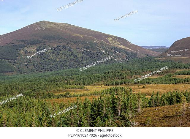 Glenmore Forest Park in the Cairngorms National Park, remnant of the Caledonian Forest near Aviemore, Badenoch and Strathspey, Scotland