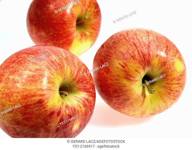 Royal Gala Apples, malus domestica against White Background