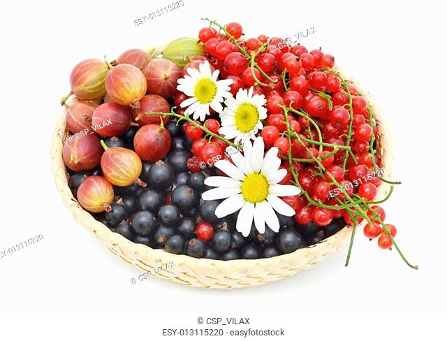 Basket with berries