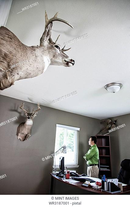 Hispanic man standing at window in his office with mounted deer heads on the walls