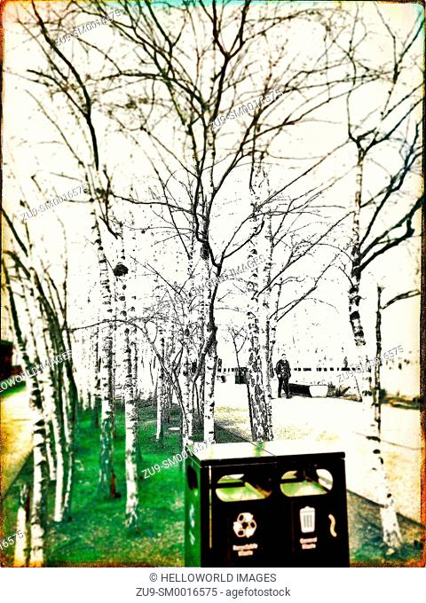 Silver birch trees near the Tate Modern, Bankside, London, England, Europe