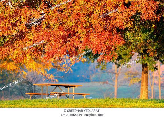 Autumn tree bench