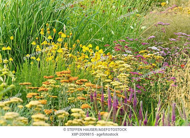 Fernleaf yarrow (Achillea filipendulina) and dyer's chamomile (Anthemis tinctoria syn. Cota tinctoria)