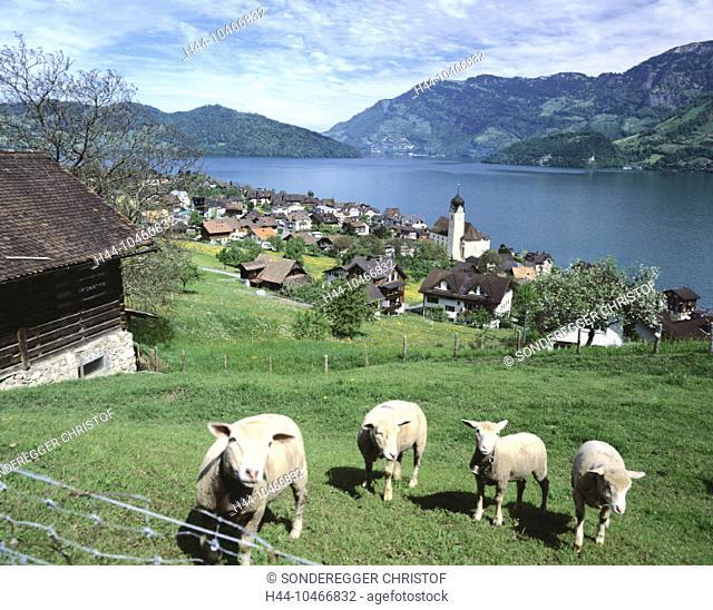 10466832, view, pelvic reeds, mountains, canton Nidwalden, scenery, shaft, Switzerland, Europe, Vierwaldstättersee, lake Lucer